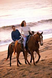 Los Cabos Horseback Riding