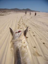 Los Cabos Shore Excursion: Horseback Riding Adventure