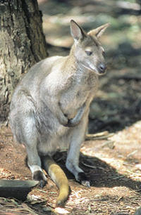 images ballarat wildlife - photo #45