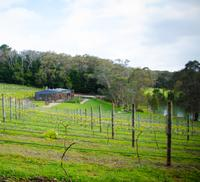 Mornington Peninsula Day Trip Including Tour of Green Olive at Red Hill