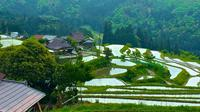 Local Cooking and Cycling Tour: Beautiful Takashima Biwa Lake and Rice Terraces