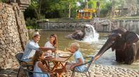 Breakfast with the Orangutans at Bali Zoo