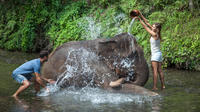Mahout for a Day Experience at Bali Zoo Including Lunch and Balinese Massage
