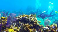 Haiti 2-Tank Scuba Diving Boat Excursion