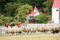 Queenstown Super Saver: Milford Sound Nature Cruise plus Walter Peak High Country Farm Tour