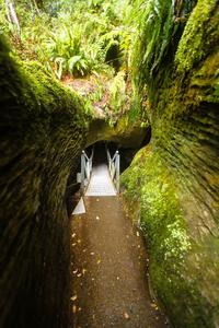 Te Anau Glow Worm Caves Tour