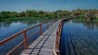 Azraq Wetland Private Half Day Tour from Amman