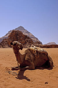 Private Tour: Wadi Rum from Aqaba