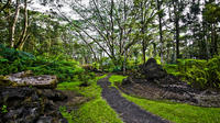 Hilo Shore Excursion: Lava Forest and Falls