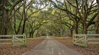 Private Electric Or Traditional Guided Bike Tours In Savannah