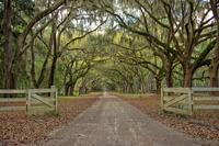 Private Tour: Electric Or Traditional Guided Trips and Bike Excursions In Savannah
