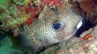 2-Day Marine Biology Scuba Diving Course with Accomodation in Carriacou