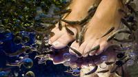 1-Hour Aroma Oil Massage plus 20-Minute Free Fish Pedi