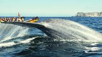 3-Day Chilean Experience Including Whale Watching from Valparaiso