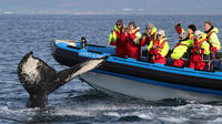 Big Whale Safari and Puffins Tour from HusavA­k