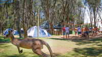 2-Night Weekend Surf Camp from Sydney