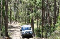 Gold Coast Lamington National Park and Tamborine Mountain 4WD Eco Tour