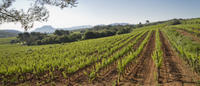 Private Provençal Wine-Tasting Tour with Picnic Lunch from Cannes
