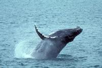 Whale Watching and Dolphin Spotting Cruise from the North Island