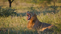 4-Day Kruger Park Tour from Johannesburg