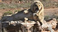 Cape Town Shore Excursion: Aquila Safari