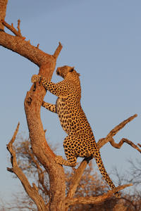 Kruger National Park Morning Game Drive