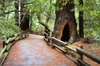 San Francisco City and Muir Woods Trip with Optional Bay Cruise and Ferry to Sausalito