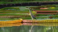 Private Mauritius Tour: Pamplemousses, Port Louis, Mont Choisy and La Croisette Mall - , , Mauritius