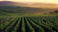 Private Full-Day Tour of Champagne Region