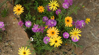 3-Day Wild Flowers Guided Tour from Cape Town