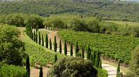 Private Half-Day Tour of Montalcino and Crete Senesi from Siena