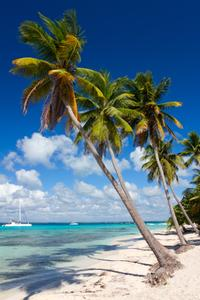 Catamaran Cruise to Saona Island from La Romana