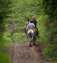 El Limón Waterfall Tour and Horseback Ride from Samaná