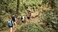 Paraty Rainforest Trek and Secluded Beach Tour