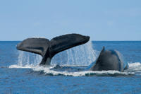 San Diego Whale Watching Expedition Cruise*