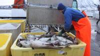 Polar Fishing Adventure From Tromso
