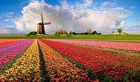 Amsterdam Super Saver: City Tour plus Zaanse Schans Windmills, Volendam and Marken Day Trip