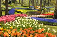 Amsterdam Super Saver: Windmill, Tulip Tour to to Zaanse Schans, Marken, Volendam, Keukenhof