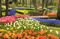 Keukenhof Garden Private Transfer with Entrance Tickets