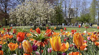 Small-Group Half-Day Tour of Keukenhof: The Garden of Europe