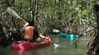 Damas Island Mangrove Kayaking Tour