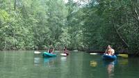 Damas Island Mangrove Kayaking Tour