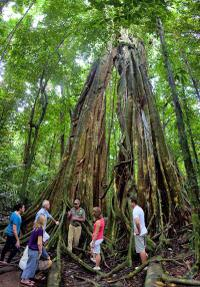 Mossman Gorge, Aboriginal Dreamtime Walk and Daintree River Crocodile Cruise Day Trip