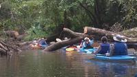 Cypress Swamp Kayak Adventure