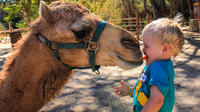 Camel Ride and Animal Sanctuary Tour in Los Cabos
