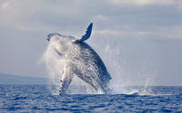 Samana Day Trip and Whale Watching Excursion from Punta Cana