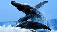 Samana Peninsula Whale Watching Cruise from Punta Cana