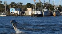 Dolphins at Sunset Kayak Tour