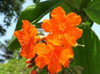 Queen Elizabeth II Botanic Park Cayman Island