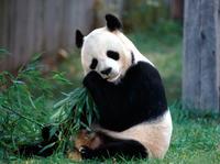 Private Half-Day Beijing Zoo Panda House and Beijing Aquarium